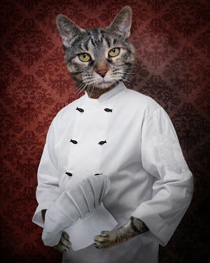 Lisa Howarth CAT DRESSED AS CHEF WITH FISH BUTTONS Animals