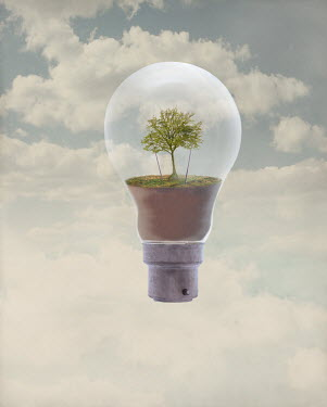 Peter Hatter TREE INSIDE FLOATING LIGHTBULB WITH CLOUDS Miscellaneous Objects
