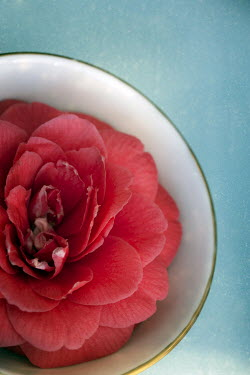 Sally Mundy BEAUTIFUL RED FLOWER IN BOWL Flowers