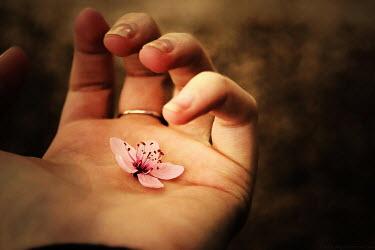 Samantha Meglioli FEMALE HAND HOLDING FLOWER Women