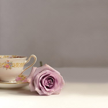 Michelle Anderson ROSE WITH CHINA CUP AND SAUCER Miscellaneous Objects