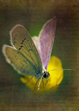 Ildiko Neer CLOSE UP OF BUTTERFLY ON FLOWER Insects