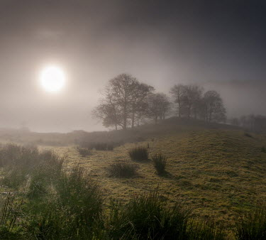 Tim Gartside MISTY FIELD AT SUNSET Fields