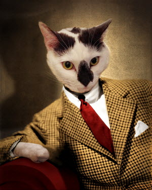 Lisa Howarth CAT IN A TWEED JACKET AND TIE Animals