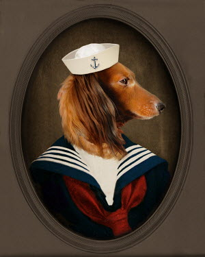 Lisa Howarth DOG IN A SAILOR SUIT Animals
