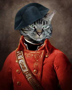 Lisa Howarth CAT DRESS AS NAPOLEON Animals