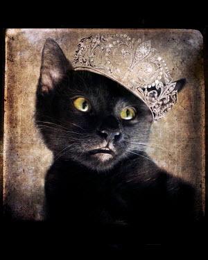 Lisa Howarth CAT WEARING DIAMOND TIARA Animals