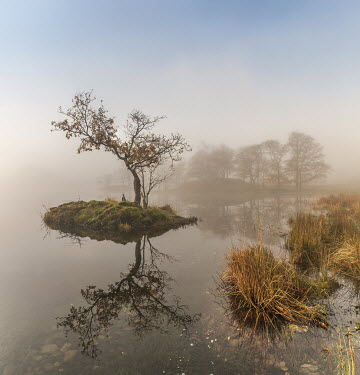 Tim Gartside TREE ON ISLAND REFLECTED ON MISTY LAKE Miscellaneous Water