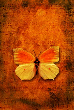 Valentino Sani BUTTERFLY AGAINST MUSICAL SCORE SHEET Miscellaneous Objects