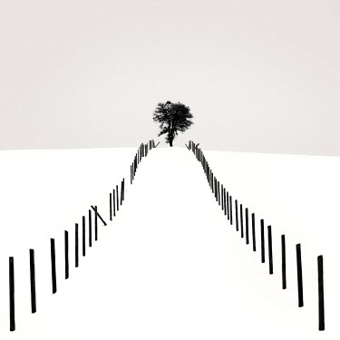 Ebru Sidar TREE AND FENCE IN SNOWY FIELD Snow/ Ice