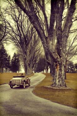 Jill Battaglia VINTAGE CAR ON TREE LINED ROAD Cars