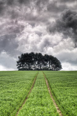 John Race TREES IN FIELD WITH STORMY SKY Fields
