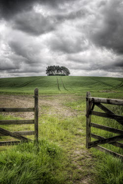 John Race TREES IN FIELD WITH STORMY SKY Gates