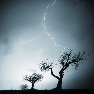 Mustafa Dedeoglu TREE BEING STRUCK BY LIGHTENING Trees/Forest
