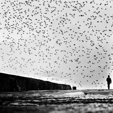 Mustafa Dedeoglu MAN SURROUNDED BY FLOCK OF BIRDS Men