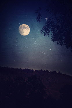Marta Nardini FULL MOON AND STARS IN NIGHT SKY Trees/Forest
