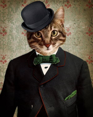 Lisa Howarth CAT IN AT HAT AND BOW TIE Animals