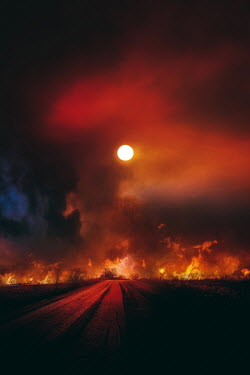 Dragan Todorovic FOREST FIRE AT NIGHT Paths/Tracks