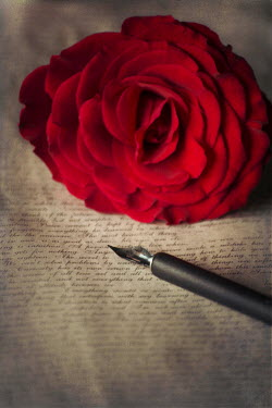 Karina Simonsen OLD LETTER WITH FOUNTAIN PEN AND ROSE Miscellaneous Objects