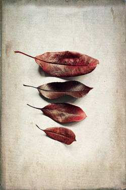 Jill Ferry FOUR AUTUMNAL LEAVES Flowers
