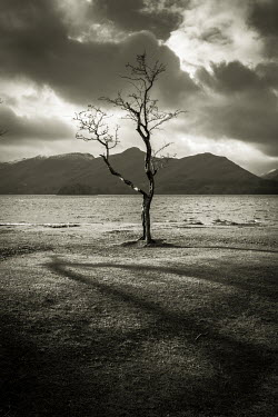 Graham Hunt BARE TREE BY LAKE Trees/Forest