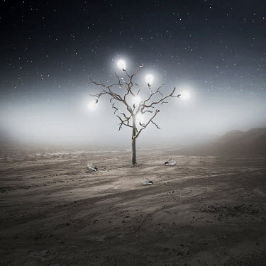 Zoltan Toth TREE WITH LIGHT BULBS AT NIGHT Trees/Forest