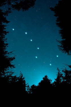 Clayton Bastiani STARS IN THE NIGHT SKY Trees/Forest