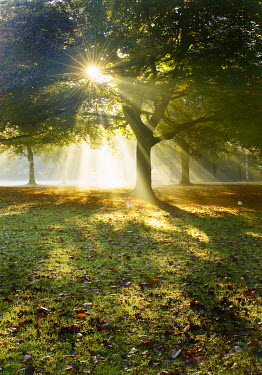 Thomas Szadziuk SUNLIGHT STREAMING THROUGH TREES IN PARK Trees/Forest