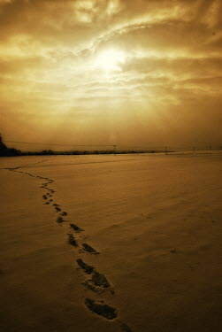 Thomas Szadziuk FOOTSTEPS IN SAND AT SUNSET Seascapes/Beaches