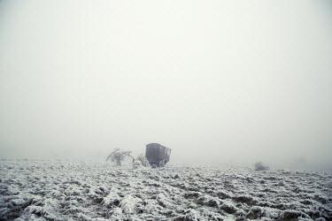 Carmen Spitznagel ABANDONED CART IN SNOWY FIELD Snow/ Ice