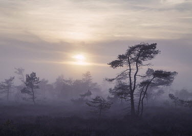 Carmen Spitznagel TREES IN MIST AT SUNSET Trees/Forest