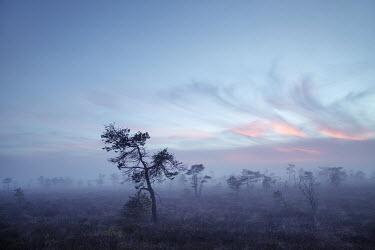 Carmen Spitznagel TREES AT SUNSET Trees/Forest