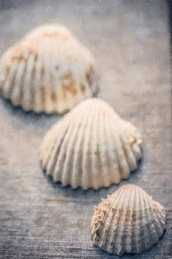 Elly De Vries THREE SEASHELLS Miscellaneous Objects