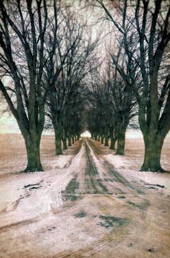 Jill Battaglia TREE LINED ROAD IN WINTER Paths/Tracks