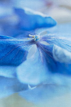 Jill Ferry DELICATE BLUE FLOWER Flowers