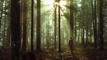 Sarah Ann Loreth WOMAN WALKING IN SUNLIT FOREST Women