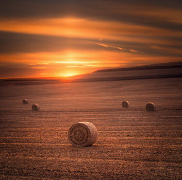 Jake Olson HAY BALES IN FIELD AT SUNSET Fields