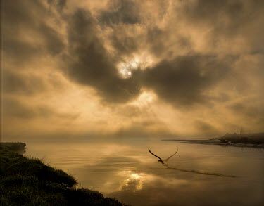 Adrian Leslie Campfield SWAN TAKING OFF OVER RIVER AT SUNRISE Birds