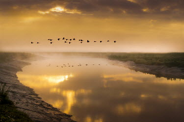 Adrian Leslie Campfield BIRDS FLYING OVER RIVER DARENTH AT SUNRISE Miscellaneous Water