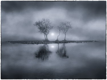 Adrian Leslie Campfield EERIE TREES IN FOG REFLECTED IN WATER Trees/Forest