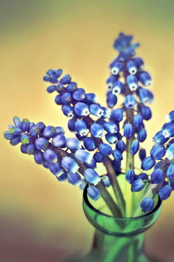 Peter Hatter BLUE FLOWERS IN GREEN BOTTLE Flowers