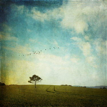 Dirk Wustenhagen BIRDS FLYING OVER TREE IN FIELD Trees/Forest