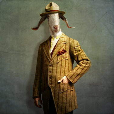 Martine Roch GOAT IN SUIT AND HAT Animals