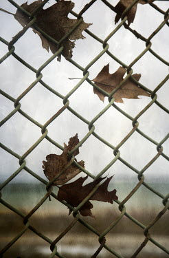 Jude McConkey AUTUMN LEAVES ON METAL FENCE Building Detail