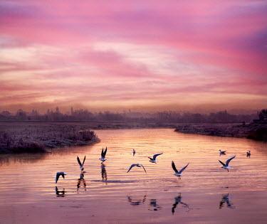 Adrian Leslie Campfield BIRDS FLYING OVER RIVER DARENTH AT SUNRISE Birds