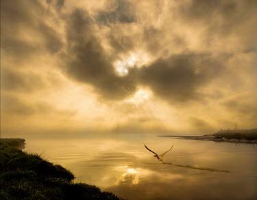 Adrian Leslie Campfield BIRD FLYING OVER RIVER AT SUNRISE Birds