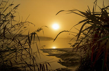 Adrian Leslie Campfield REEDS GROWING BY RIVER AT SUNSET Lakes/Rivers