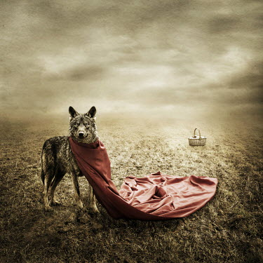 Alessandra Favetto WOLF WITH RED CAPE IN FIELD Animals