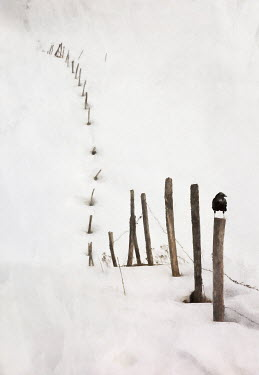 Paul Grand SNOW DRIFT COVERED FENCE Snow/ Ice