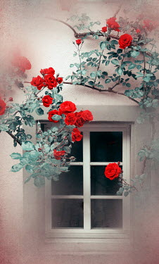 Irene Lamprakou WHITE WINDOW WITH ROSES GROWING NEARBY Building Detail